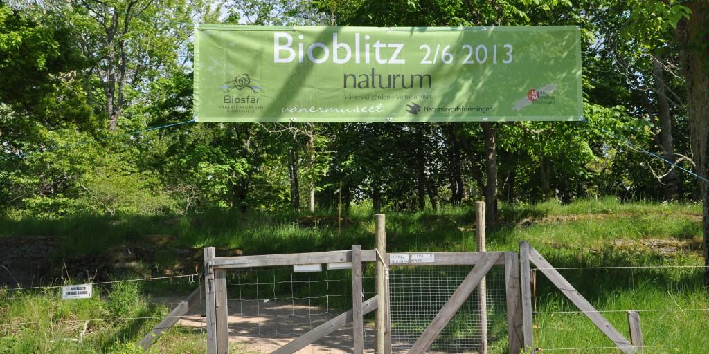 Bioblitz 2
