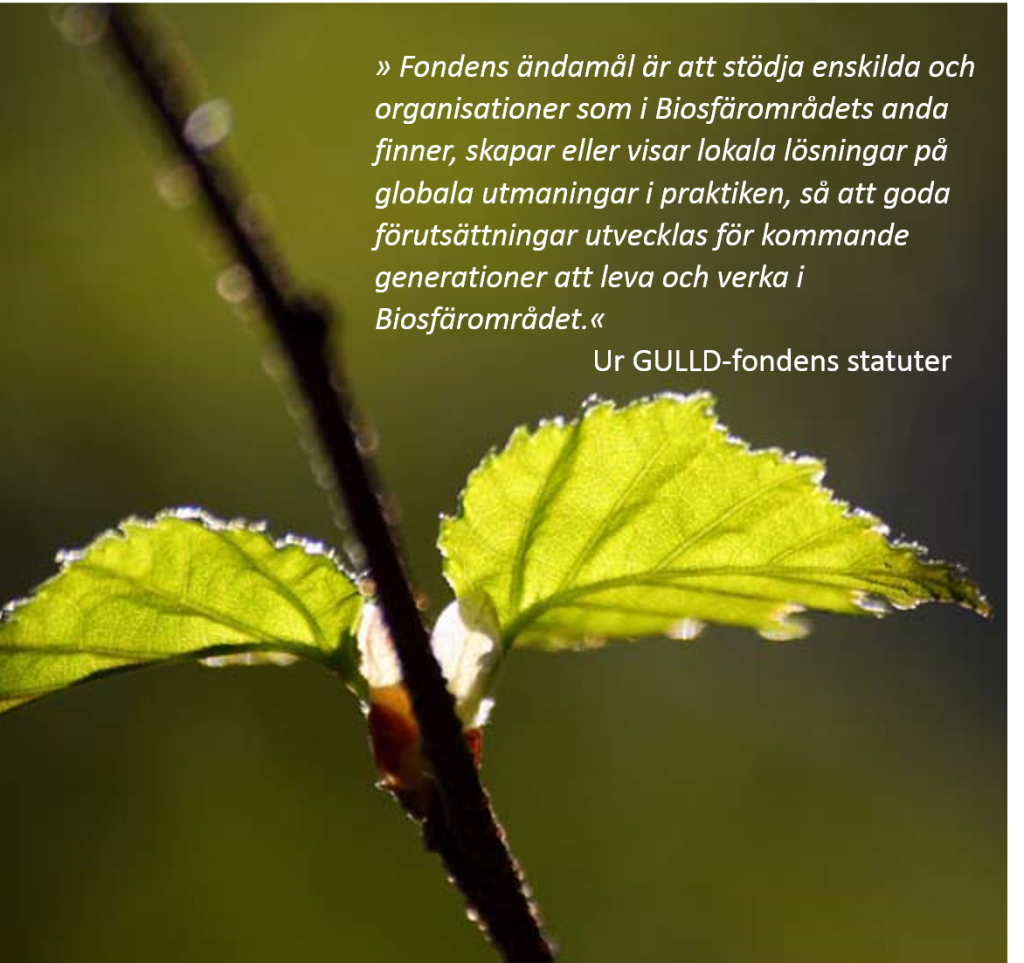 citat GULLD-statuter